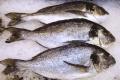 Подпольный цех по солению и переработке мороженной рыбы