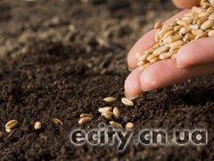 Посев зерновых