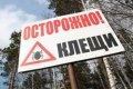 Клещи-убийцы на Черниговщине. ФОТО