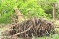 В Черниговской области мужчину насмерть убило деревом