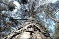 В Чернигове будут вести учет деревьев