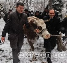 Ляшко привел корову под Верховную Раду
