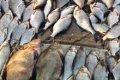 На Черниговщине во время проведени выборов 2012 задержали браконьера