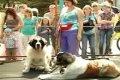 Выставка собак в Чернигове. ВИДЕО