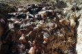 На Донбассе найдено массовое захоронение украинских солдат
