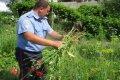 В Черниговской области уничтожили незаконный посев мака
