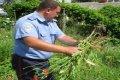 В Черниговской области милиция обнаружила плантацию мака