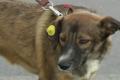 Под Киевом отравили собак. Виноваты власти? ВИДЕО