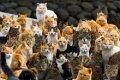 Нежин Черниговской области признали городом котов