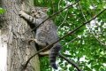 Черниговец вместе с котом застрял на дереве