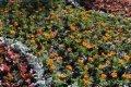 На месте захоронения в сквере Попудренко появились цветочные клумбы. ФОТО