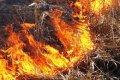 Пожары в природных экосистемах в Черниговской области. ФОТО