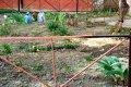 Черниговская пенсионерка сделала благоустройство возле своего подъезда. ФОТО