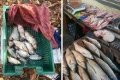На Черниговщине в течение недели браконьеры «нарыбачили» 78 кг рыбы