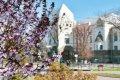 Какие цветы высаживает в Чернигове КП «Зеленстрой». ФОТО