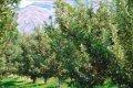 В Черниговской области будут стимулировать развитие садоводства и ягодоводства