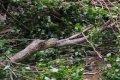 В Чернигове дерево упало на 5 автомобилей