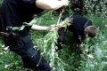 Черниговские полицейские уничтожили незаконный посев мака