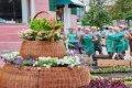 В Чернигове по улице Сережникова - новая цветочная клумба. ФОТО